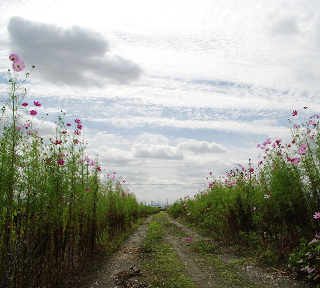 SCHOLE INC. | We Hum On The Way HomeMotohiro Nakashima